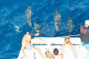 Swim with dolphins Mauritius